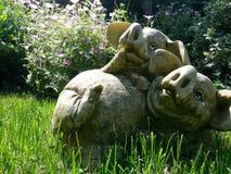 Svin i en trädgård Fotografering för Bildbyråer