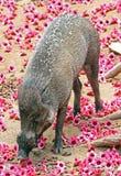 Svin med blommor royaltyfri foto