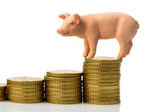 Svin på bunt av mynt royaltyfria bilder