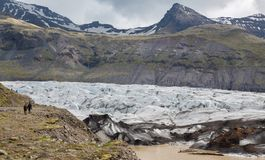 Svinafellsjokull in Iceland. Wide angle view of svinafellsjokull glacier tongue and tourists, Iceland Stock Photos