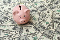 Svinbank på hundra dollarsedlar Royaltyfri Bild