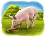 Svinet äter på lantgården stock illustrationer