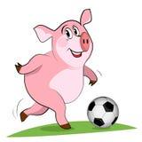 Svinlek en fotboll. Fotografering för Bildbyråer