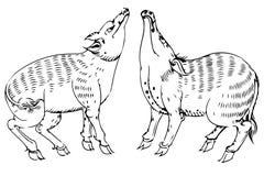 Svinmodell Thailand vektor illustrationer