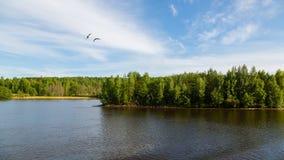 Красивое река Svir ландшафта лета в севере России стоковое фото