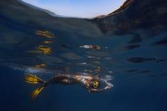 Sväva för kvinna som är undervattens- Royaltyfria Foton