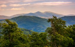 Svydovets ridge behind the beech forest at sunset. Beautiful summer landscape of Carpathians Stock Photos
