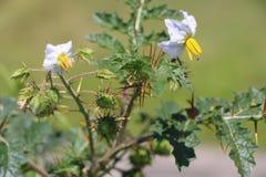 Swój kwiat Zdjęcie Royalty Free