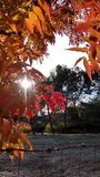 Swój Piękny ranek! zdjęcie royalty free