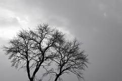 sw结构树冬天 免版税库存图片