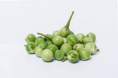 Sw torvum Solanum ягоды Турции На белой предпосылке селективно Стоковое Фото