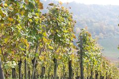 Swabian vineyard Stock Photos