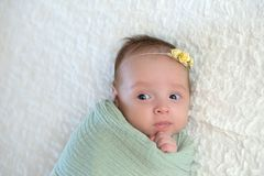 Alert Baby Girl Swaddled in a Light Green Wrap stock photos