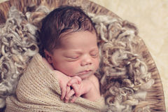 Swaddled sleeping newborn Stock Photography