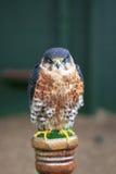 Swainsons Falke auf einem Pfosten Lizenzfreie Stockfotos