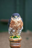 Swainsons hawk on a post Royalty Free Stock Photos