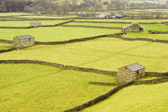 Swaledale Stock Photo