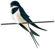 Swallow Royalty Free Stock Photo