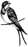 Swallow bird. Hand drawn illustration Stock Photography