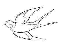 Swallow bird black white  sketch illustration Stock Image