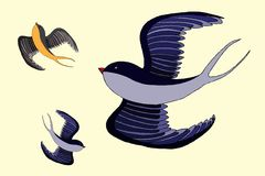 Swallow bird illustration Royalty Free Stock Image