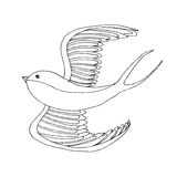 Swallow bird illustration. Swallow bird. Hand drawn  stock illustration. Black and white whiteboard drawing Royalty Free Stock Images