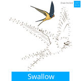 Swallow bird learn to draw vector Royalty Free Stock Images