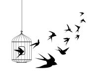 Swallow birds flying out of cage Stock Photo