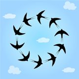 Swallow birds in sky Royalty Free Stock Images
