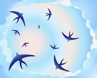 Swallow circle Stock Image
