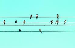 Swallow. Eastphoto, tukuchina,  Swallow, Animal capture Stock Photos