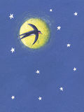 Swallow flying in the night stock illustration