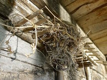 Swallow nest in a cabin Royalty Free Stock Photo