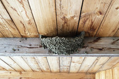 Swallow nest. Little house for birds Stock Images
