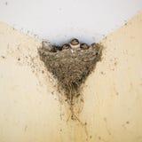 Swallow nest royalty free stock photos
