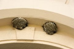Swallow nest under arcade Royalty Free Stock Image