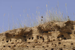 Swallow nests on the top of sandy cliff Stock Images