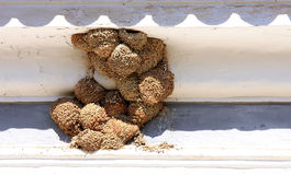 Swallow nests under eaves, Portugal Stock Photo