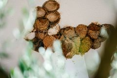 Swallow nests Royalty Free Stock Photo
