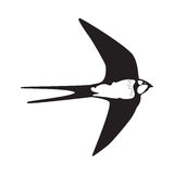 Swallow  outline silhouette Stock Image