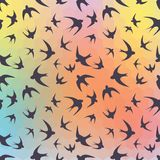 Swallow and rainbow hexagons Royalty Free Stock Images