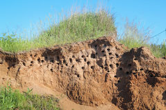 Swallow`s nest in a sand hill on the bank of the river, side view Royalty Free Stock Image