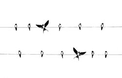 Swallow silhouette. Swallows silhouette on a sky background Stock Photography
