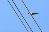 Swallow Sitting on Wire Against Blue Sky Royalty Free Stock Photography