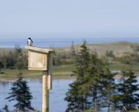 Swallow su una Camera dell'uccello fotografie stock