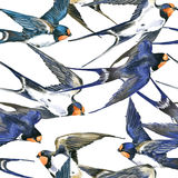 Swallow. Swallow seamless pattern watercolor Royalty Free Stock Image