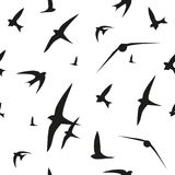 Swallow, swift, birds. Graphic vector pattern. Decorative seamless background. Stock Photos