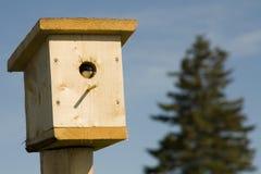 Swallow in una casa dell'uccello immagini stock