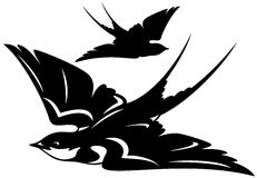 Swallow vector Stock Images
