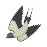 Swallow vector, vector illustration  bird, bird flying, bird silhouette, bird vector. Royalty Free Stock Images